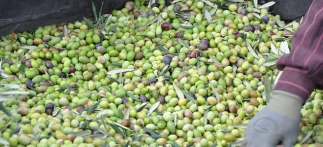 Zeytincilik sektörü 5.bölge teşvik sistemine girmek istiyor