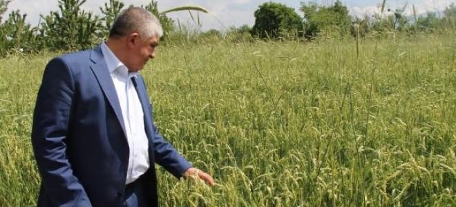 Burdur'da dolu zararı 1 milyon lira