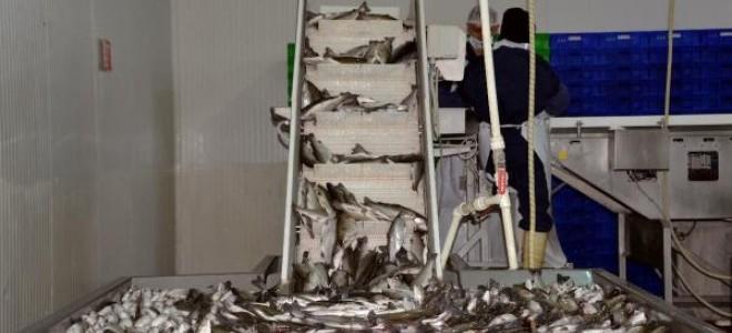 Denizi olmayan Kahramanmaraş, yılda 20 milyon dolarlık balık ihraç ediyor