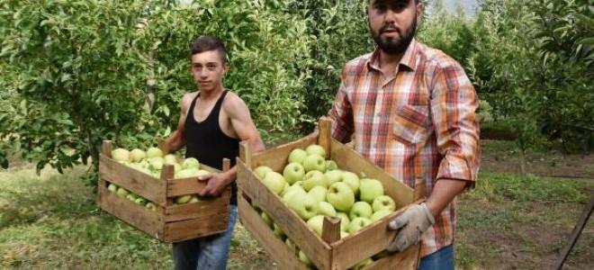 Isparta'da 700 bin ton elma rekoltesi bekleniyor