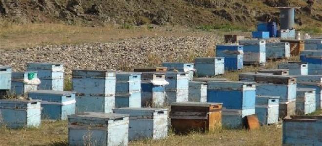 Karslı arıcıları iklim değişikliği vurdu; verim düşük