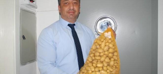 Niğde'de elit patates tohumluğu üretiliyor