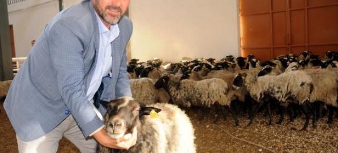 Ukrayna'dan getirdiği koyunlarla ticarete atıldı, yıllık cirosu 1.5 milyona ulaştı