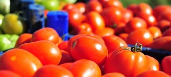 Çanakkale'de domates son hasatta yüz güldürdü