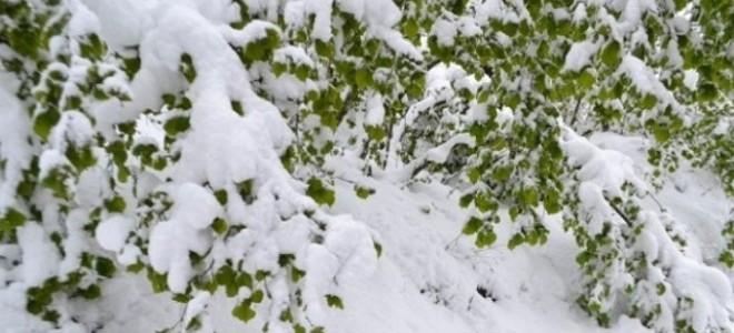 Kar gecikti, çiftçiyi 'zirai don' korkusu sardı