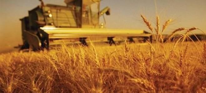 Tarım Üfe Ağustos'ta Arttı