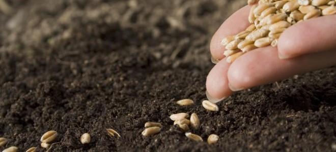 Tohumda İhracatın İthalatı Karşılama Oranı Yüzde 73'e Çıktı
