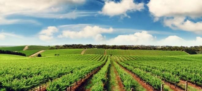 Tzob / Bayraktar: Tarım İstihdamdaki Gücünü Koruyor