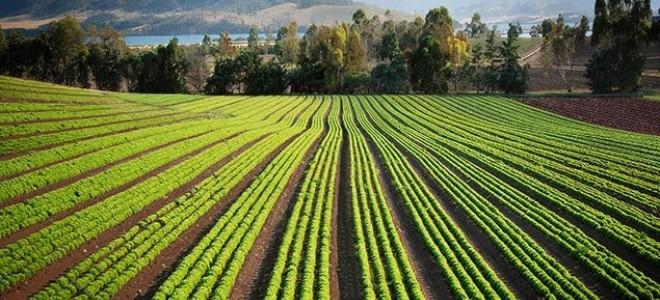Tzob/Bayraktar: Tarım Ocak'ta Beş Milyona Yakın İstihdam Sağladı