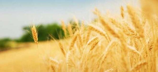 TZOB: 'Tarımda başarının sırrı kooperatifçilikte yatıyor.'